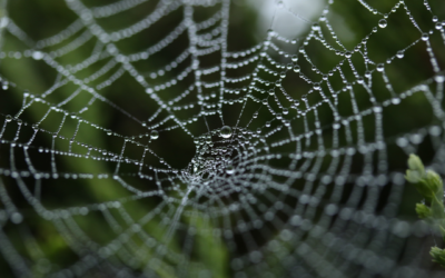 Understanding the Web and Spiders